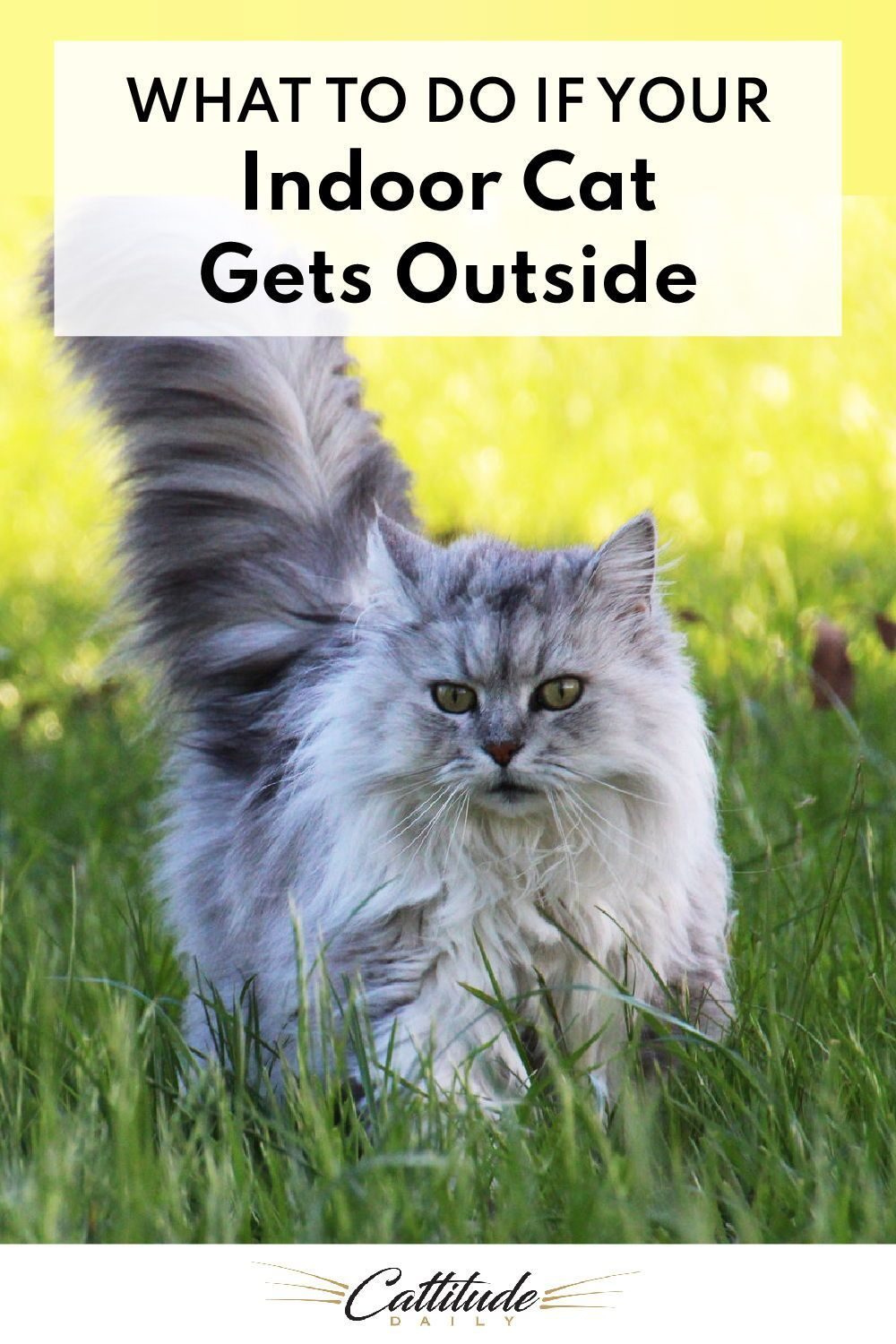 What To Do If Your Indoor Cat Gets Outside In 2020 Indoor Cat Cats Cat Care