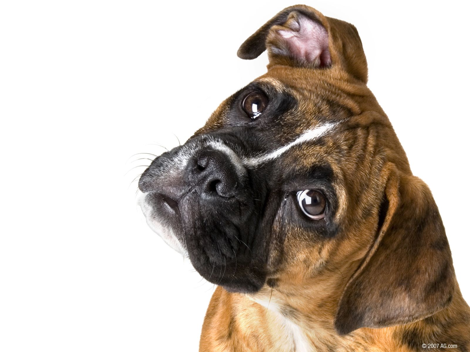 Dogs Wallpaper Soo Cute 3 Boxer Dogs Boxer Dog Breed Boxer Dogs Funny
