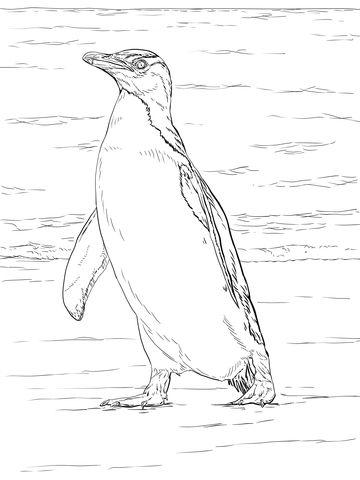 Pingüino Ojigualdo Dibujo para colorear | animales | Pinterest ...