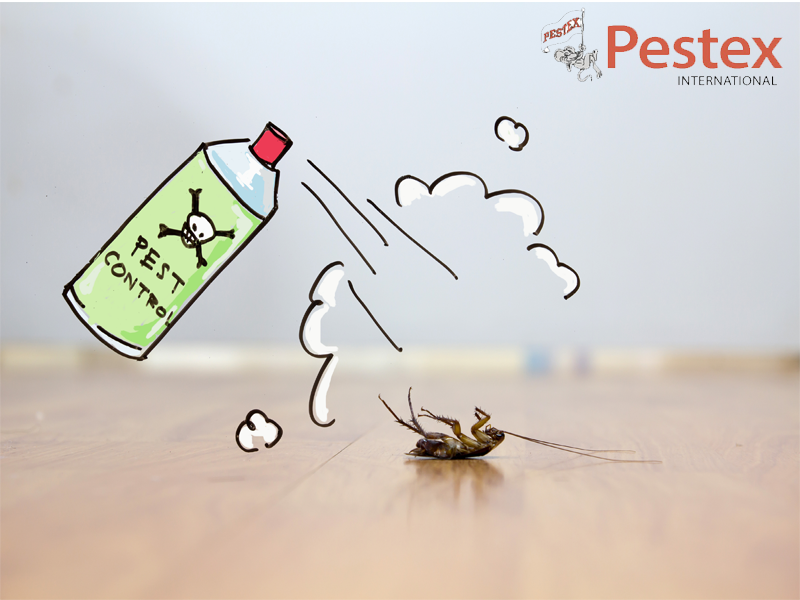 At Pestex International We Deal In Cockroach Control For Large And Small Spaces In Bahrain To Pest Control Services Insect Control