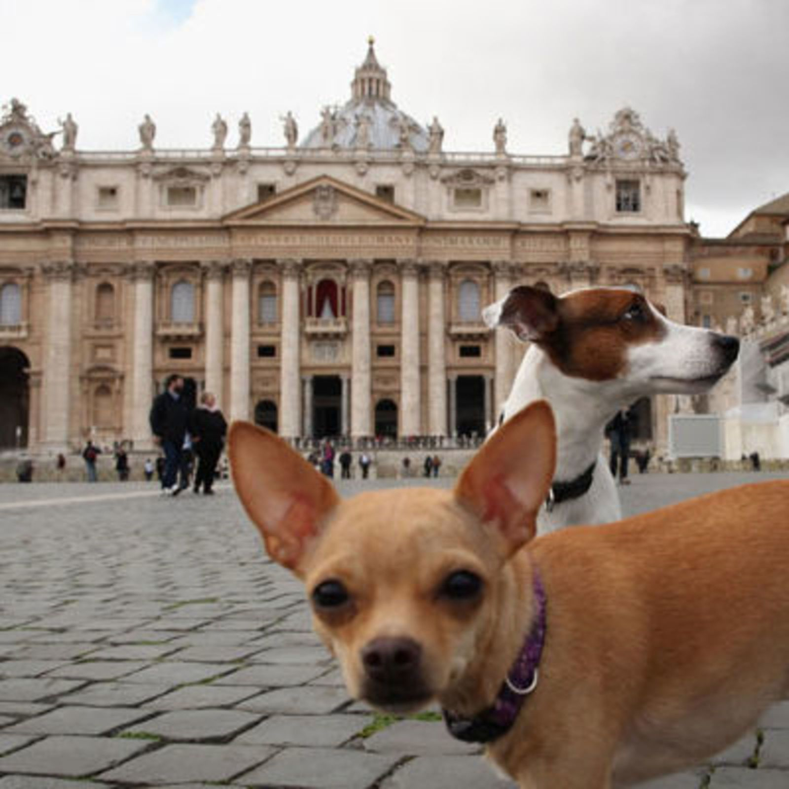 Pope Francis Confirms All Dogs Do Indeed Go to Heaven