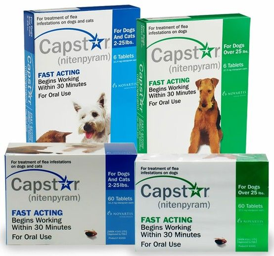 We Recommend You Follow Up Capstar Treatment With A Monthly Flea Control Product Such As Program Frontline Or Advantage Then Keep Capst Dog Health Pinte