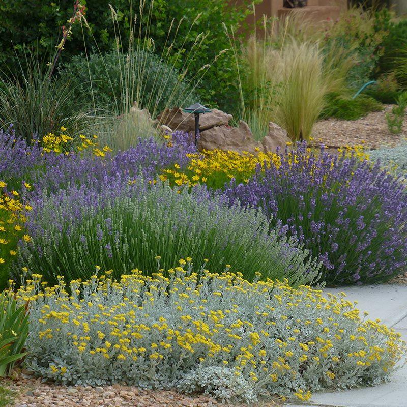 Potager Garden Blogs: My Favorite Plant Combinations