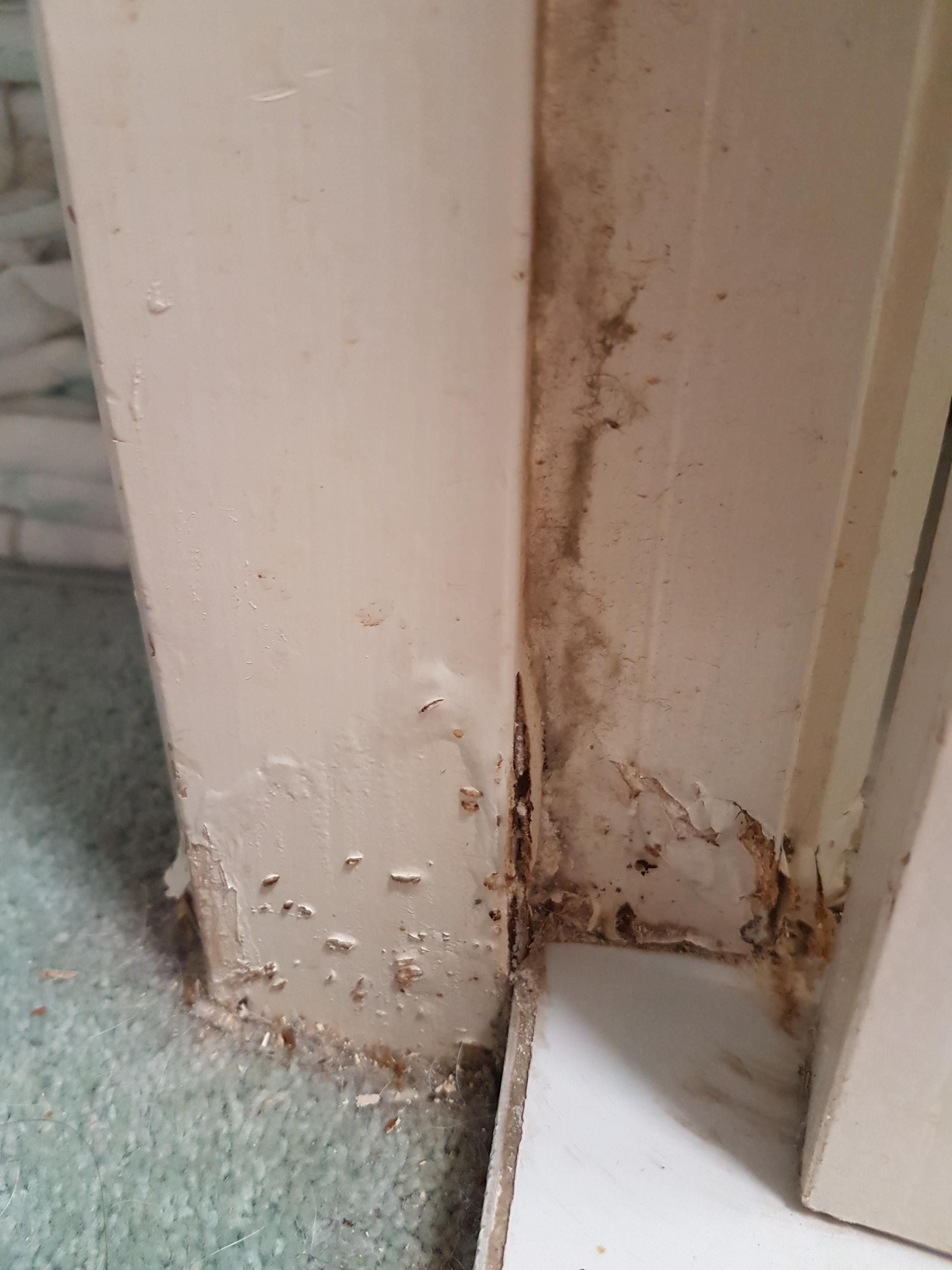 Need Advice On Some Wood Damage Of A Bathroom Door Frame Is It