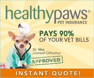 Dog Insurance And Cat Insurance From Healthy Paws Pet Insurance
