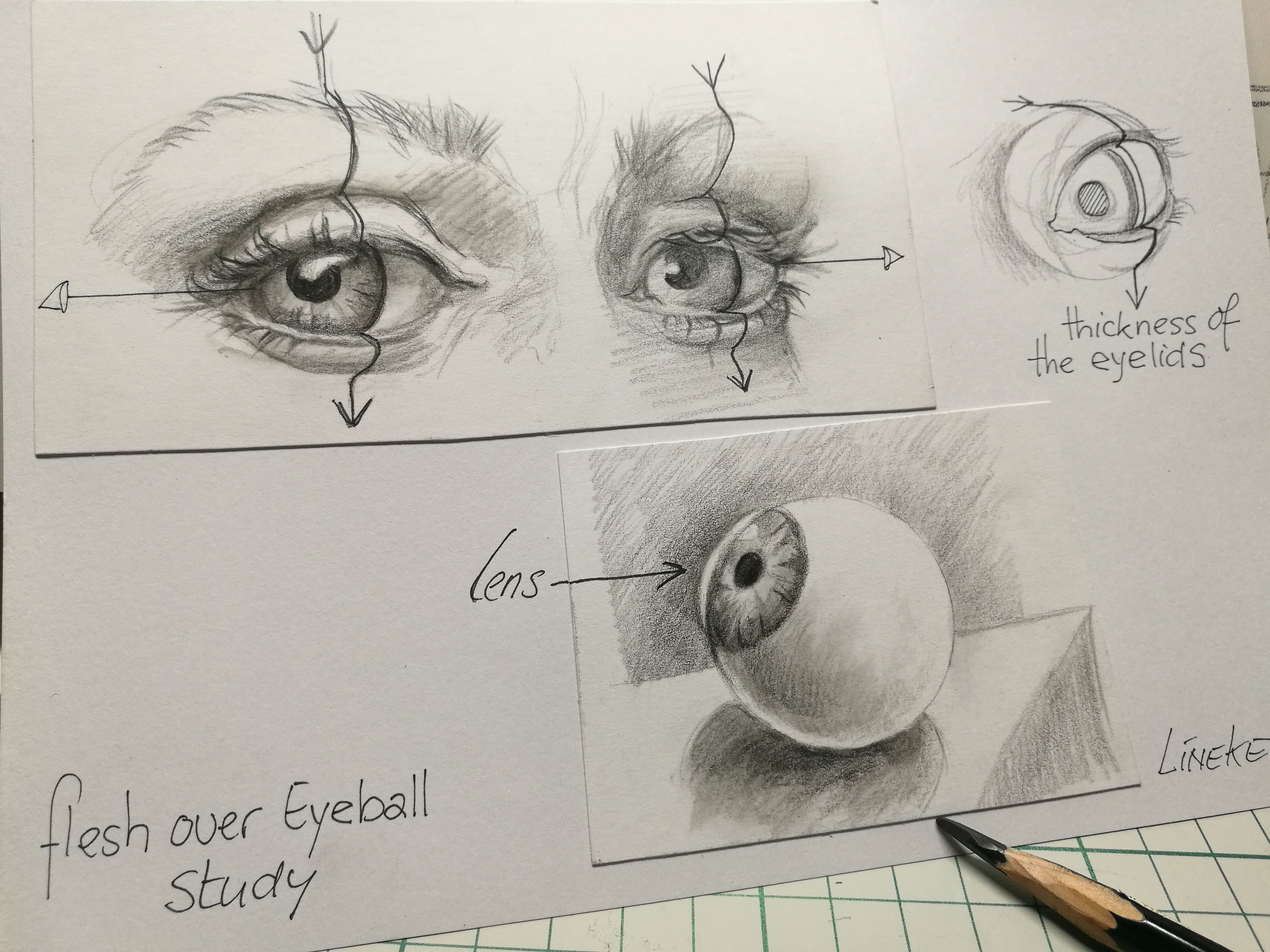 Eye Anatomy Study By Lineke Lijn Eye Study Anatomy Drawing