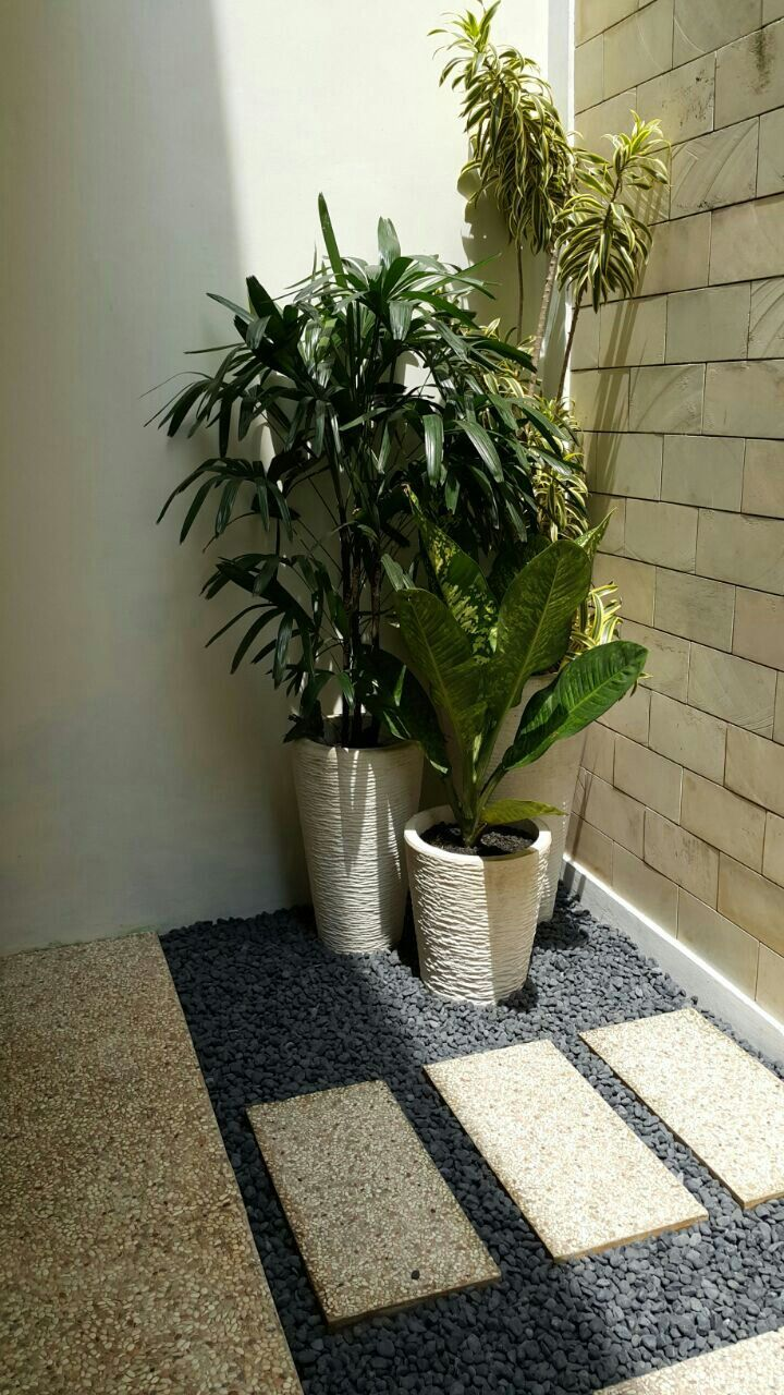 1 set pot isi 3 dilengkapi tanaman indoor Rp. 1.500.000