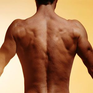 strengthen your back muscles with images  effective