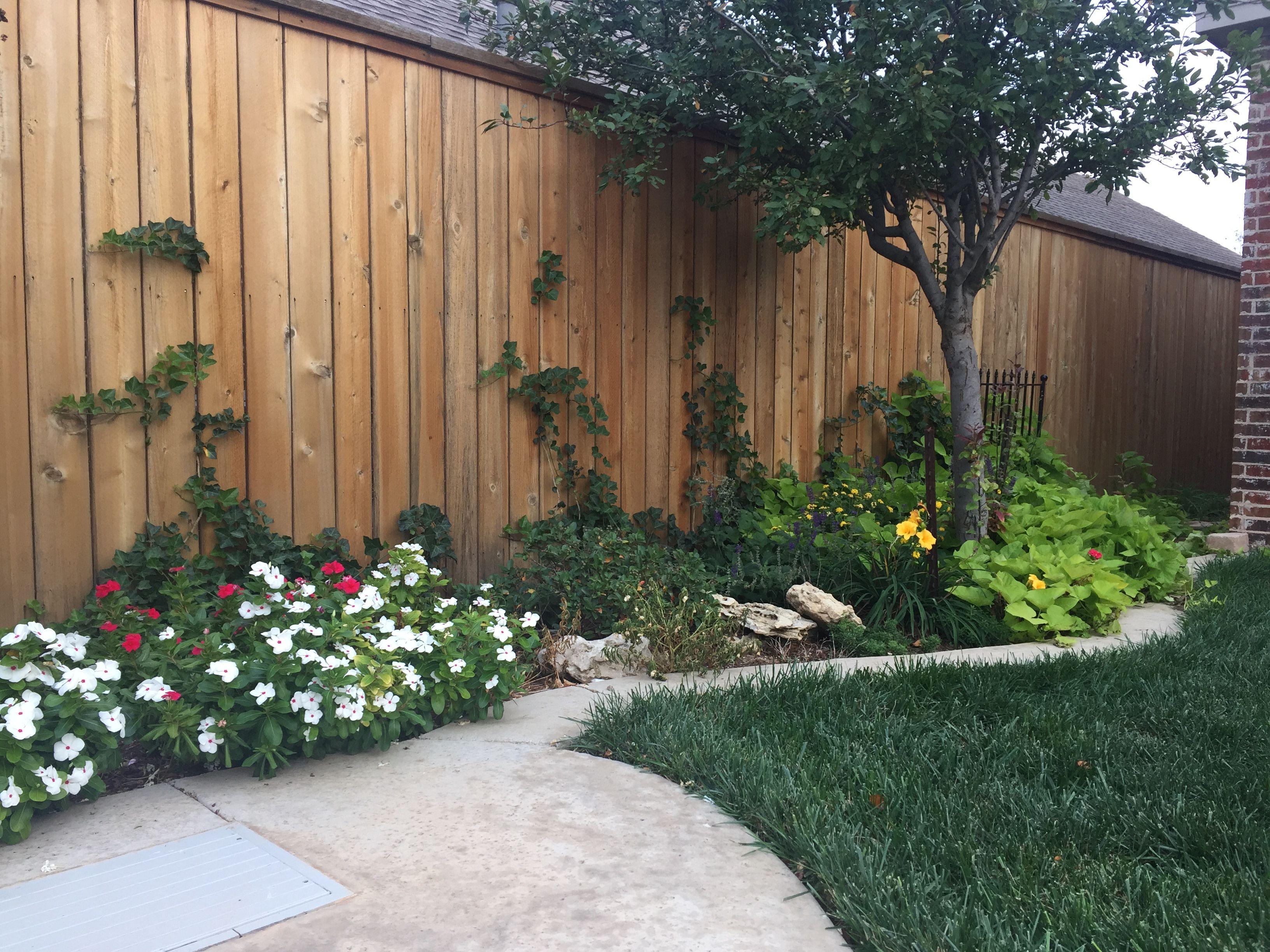 Flower bed border with white vinca, sweet potato vine   Landscaping ...