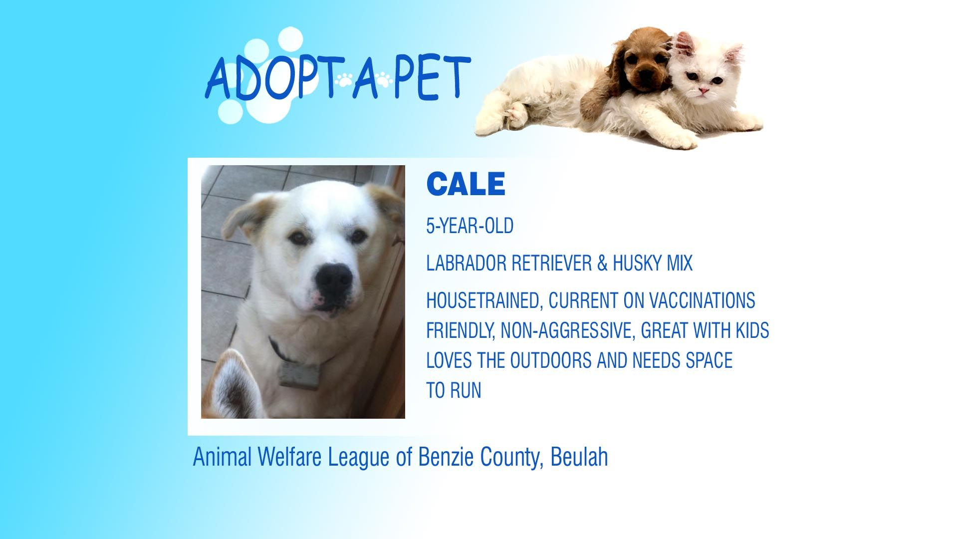 Adopt A Pet Tuesday Herb Bob The Girl Cale Animal Welfare