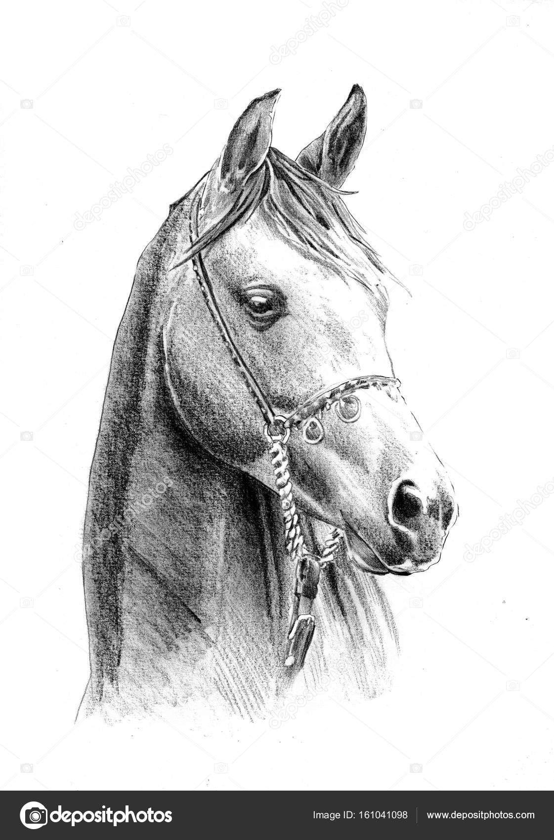 Spiksplinternieuw Tekeningen Om Na Te Tekenen Paarden | Paard tekeningen AF-53