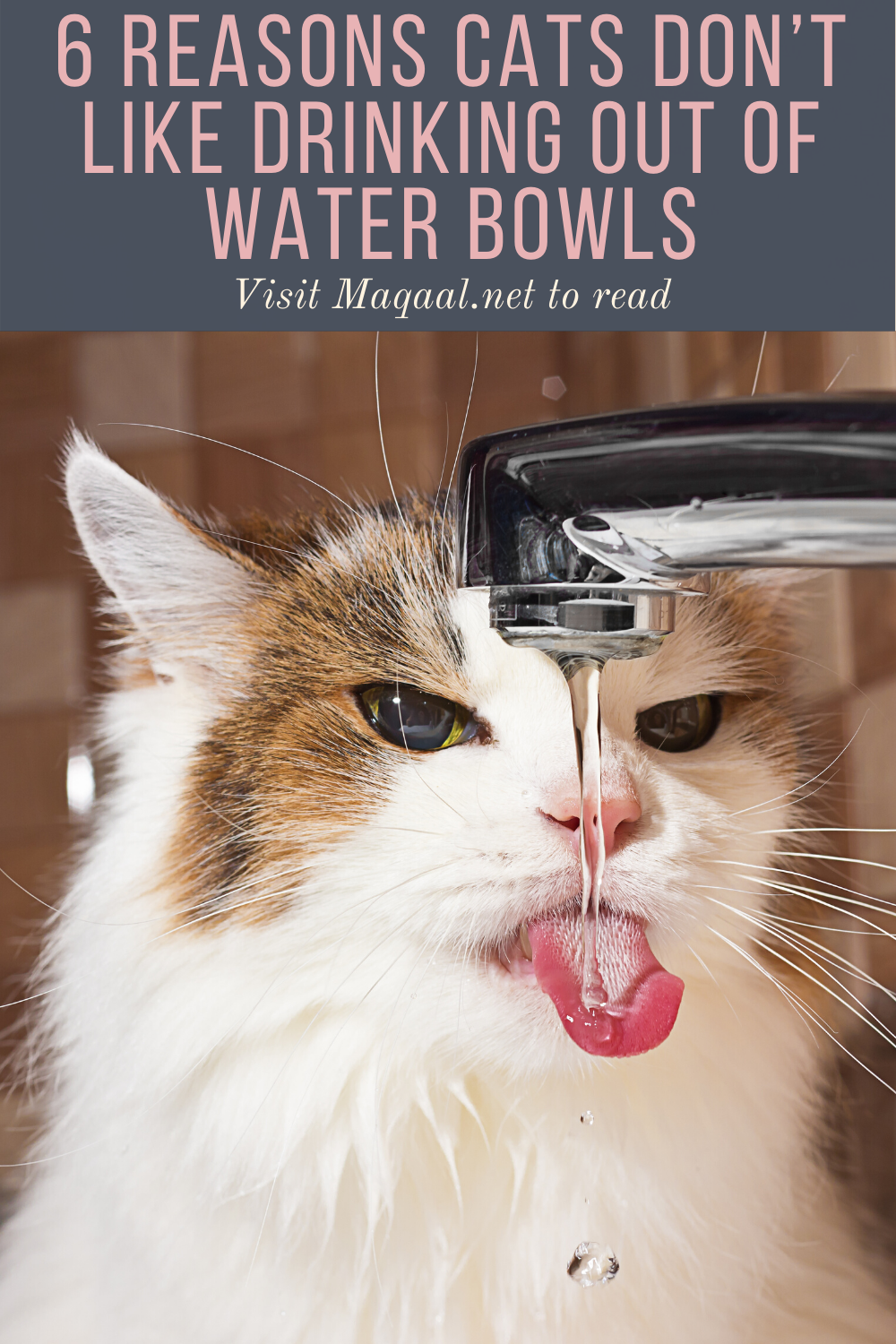 6 Reasons Cats Don T Like Drinking Out Of Water Bowls Maqaal In 2020 Cat Water Bowl Cats Cat Drinking
