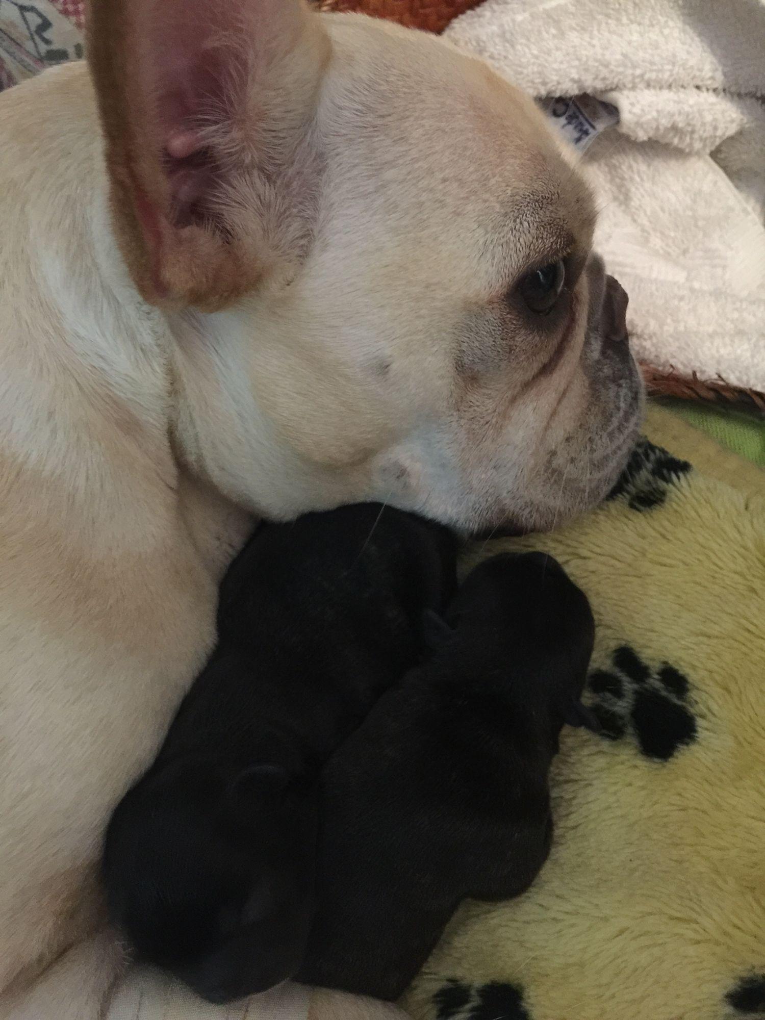 Mimi y sus bebes