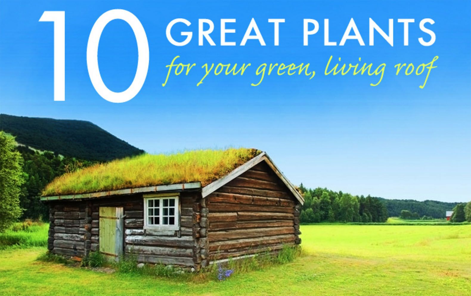 great plants for a living roof rooftop plants and living roofs