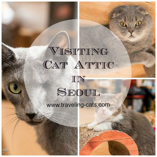 Cats From Seoul South Korea Cats Cute Cats Photos Cat Hotel
