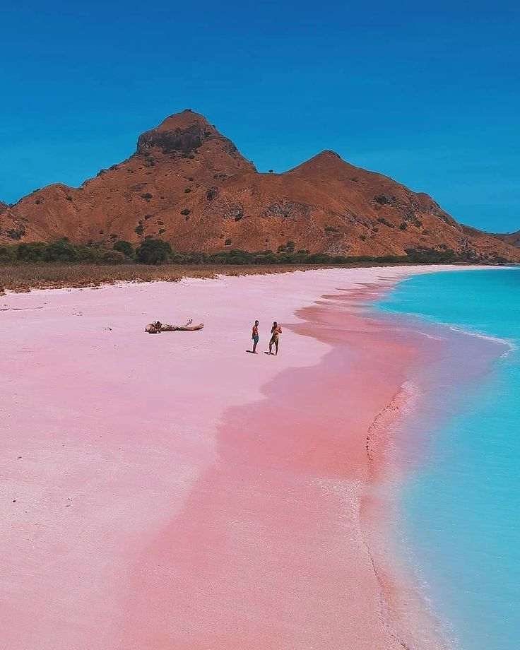 Pink beach in Komodo Island, Indonesia #indonesia # ...