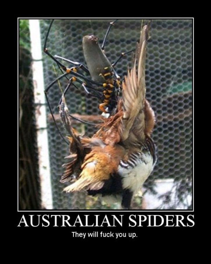 AUSTRALIAN SPIDERS. Once upon a time, traveling there was on my bucket list. Nope. Not anymore.