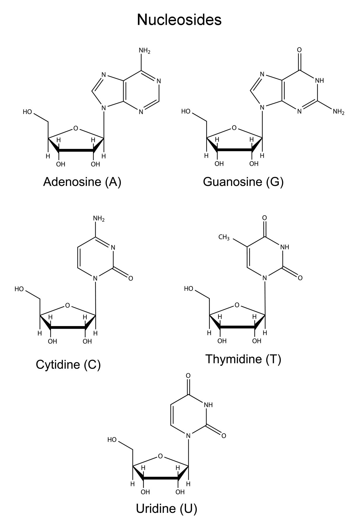 Nucleoside Vs Nucleotide The Small Yet Significant Difference Biology Notes Student Motivation Biology
