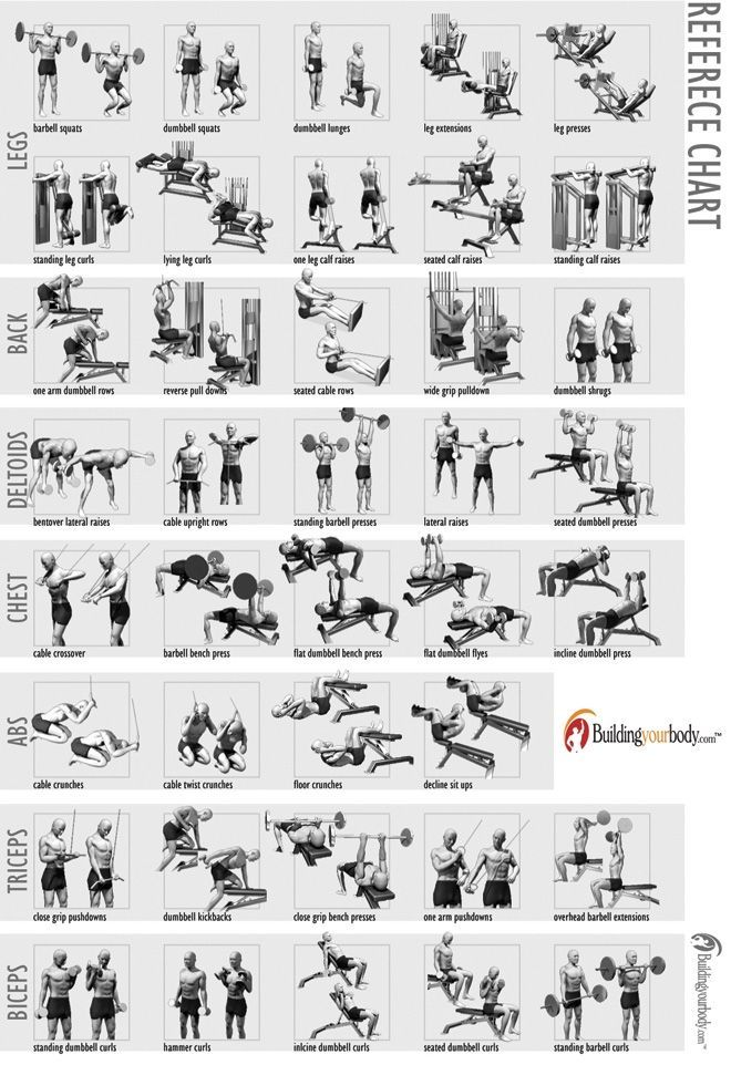 Weight lifting exercise chart also kenindlecomfortzone rh