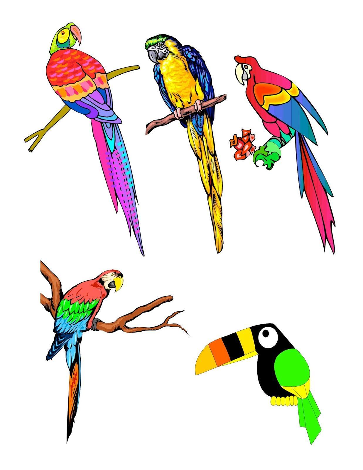 No M Birds Tropical Bird Clip Art Handout