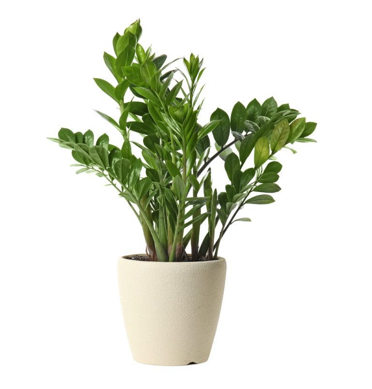 10 Low Light House Plants is part of Low light house plants, Low light plants, Indoor plants low light, House plants indoor, Indoor plants, Plants - The 9 BEST Low Light House Plants to grow in your home or office  They grow well in dark spots or under artificial lights  Also VERY easy to care for!