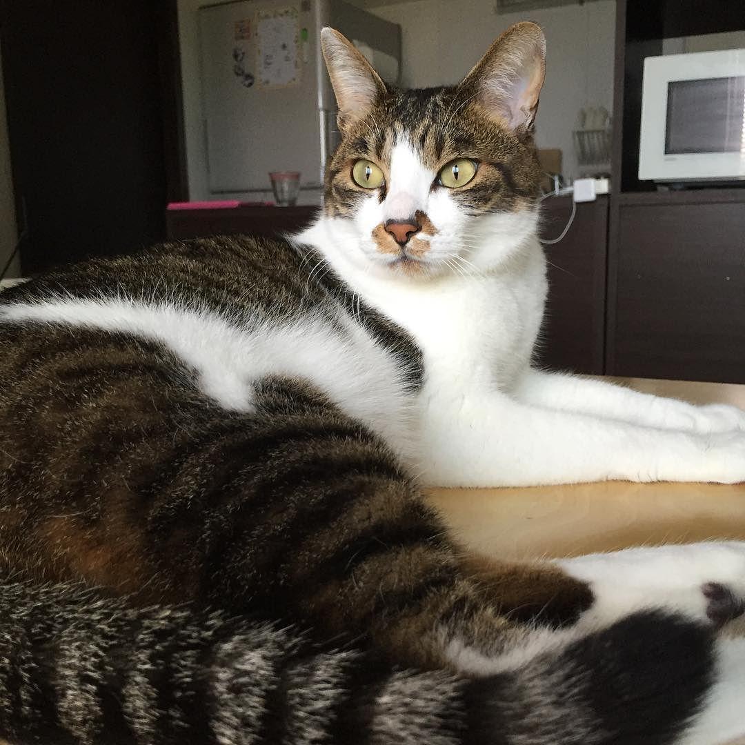 いちご鳥しゃん . #お外が気になる #でも捕まえにはいかないww #なぜなら眠いから #猫#cat#catstagram #いちご#キジトラ白 by mikachu727
