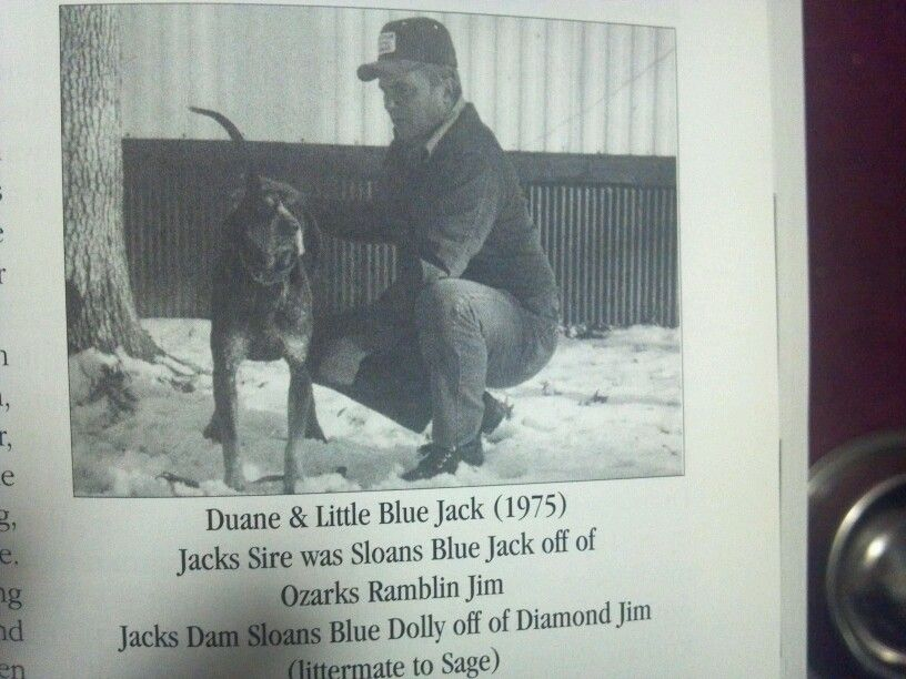 Duane Sloans bluetick from Iowa
