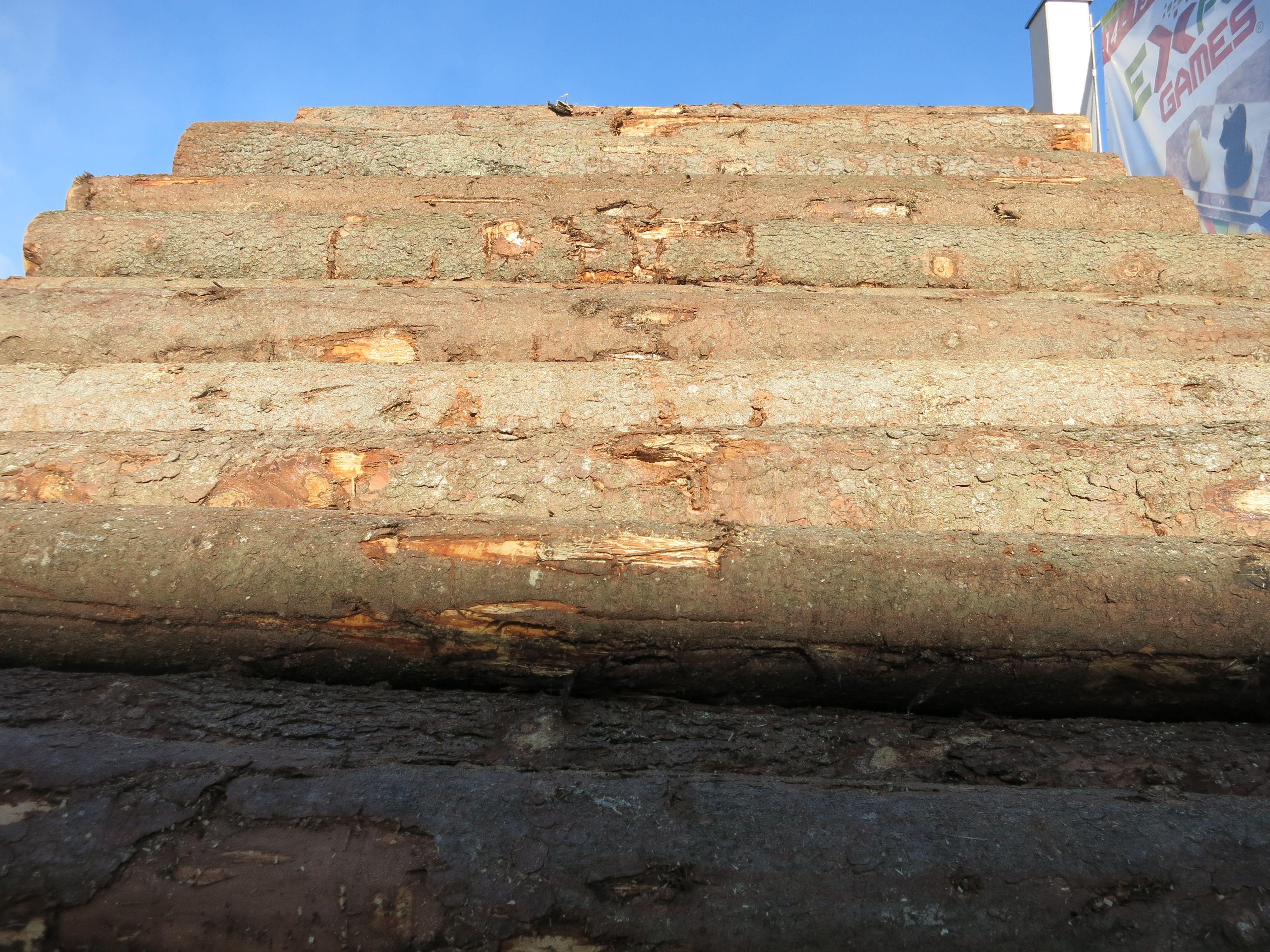 La forza e la bellezza del legno.  www.stanzedautore.it