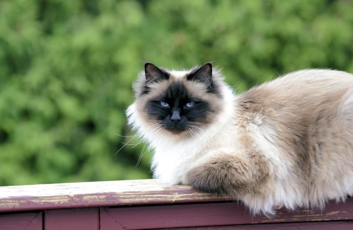A Mindblowing List of Various Kinds of Cats Cats