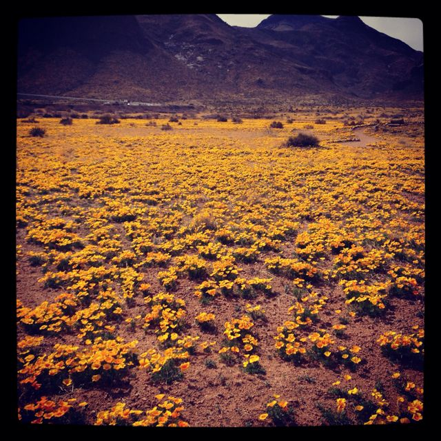 Franklin Mountains, El Paso, TX- this was the only nice thing about living in El Paso!
