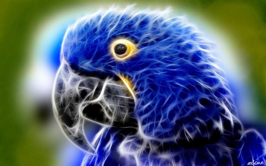 18+ Blue Parrot Wallpaper
