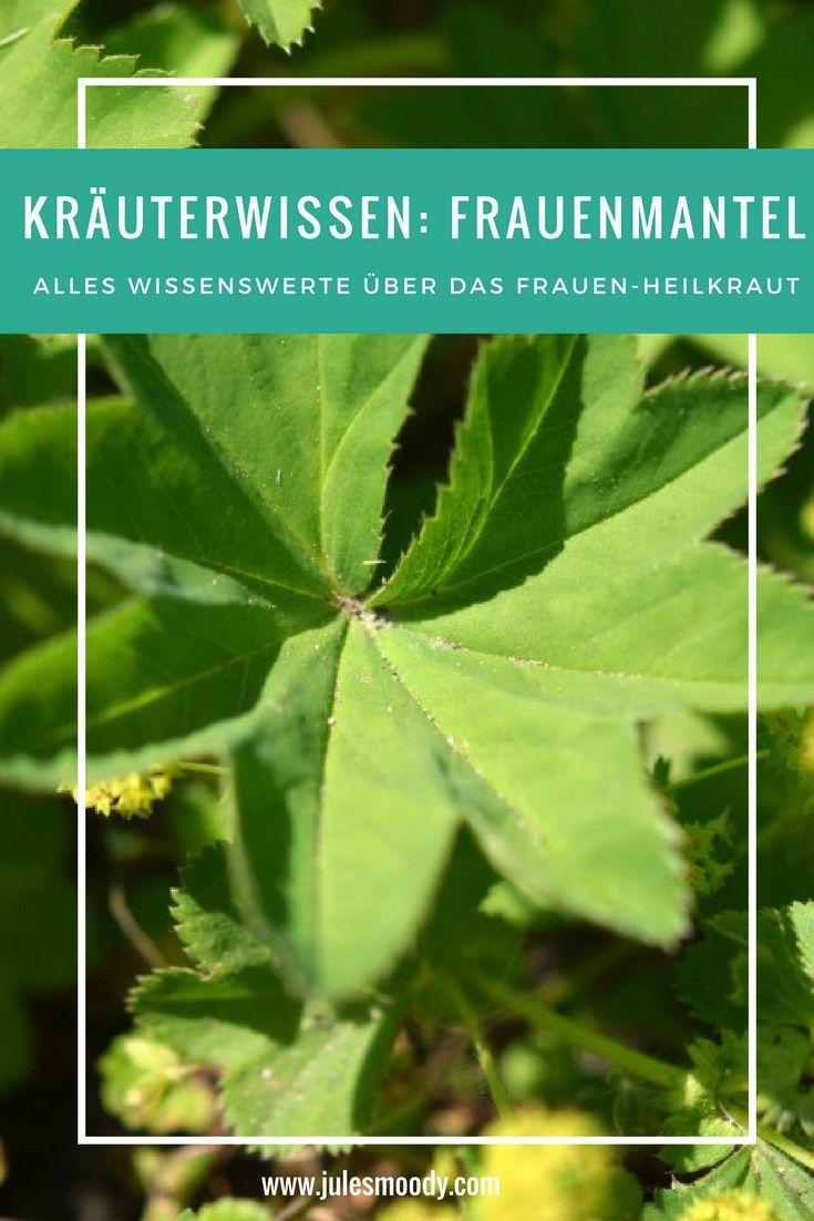 Herkunft, Volksglauben und Heilwirkung sowie Anwendungsmöglichkeiten des in der Volksmedizin beliebten Heilkrautes Frauenmantel!