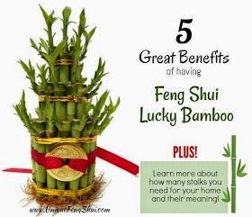 Bamboo are a Great Feng Shui Cure- Find out Why