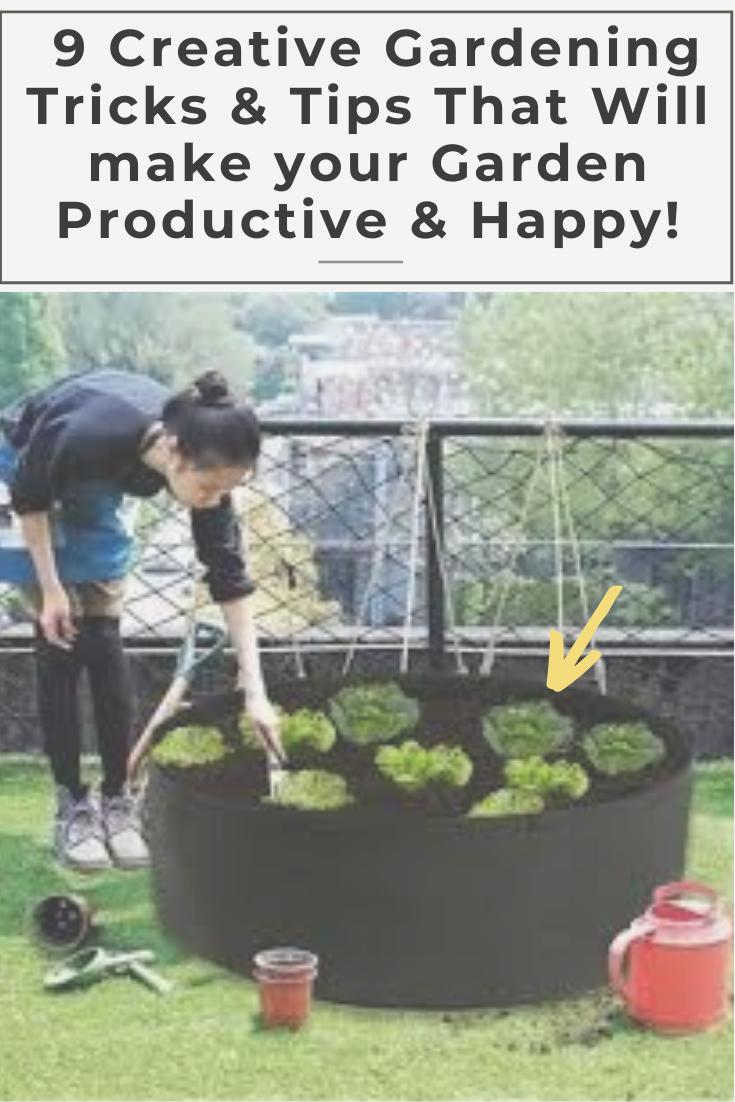 79b9c319327fa2086a427edabc7f7821 - How To Prepare Georgia Soil For Gardening