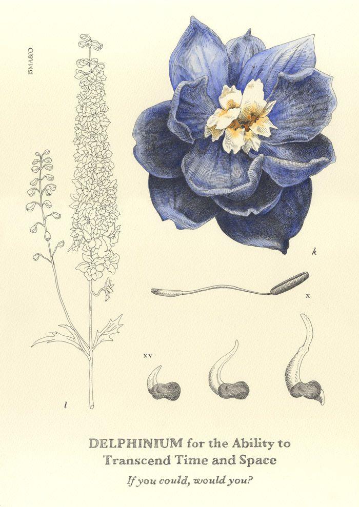 Delphinium Flower Drawing Delphinium Flowers Larkspur Tattoo