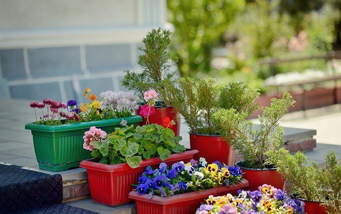 C mo hacer un jard n de interior pink ribbon 3m tips - Como hacer un jardin pequeno ...