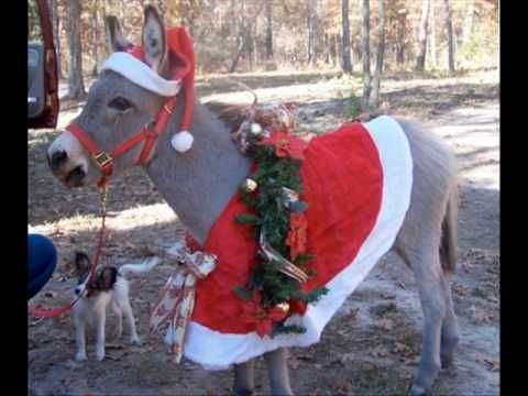 dominick the italian christmas donkey its an italian thing