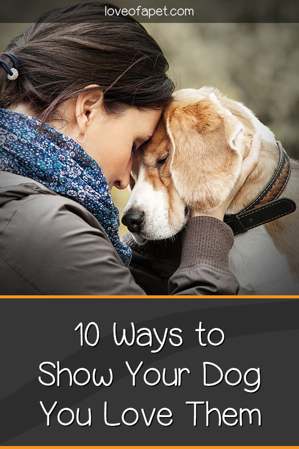 How To Show Your Dog You Love Them 10 Way Love Of A Pet Your Dog Dogs Dog Died