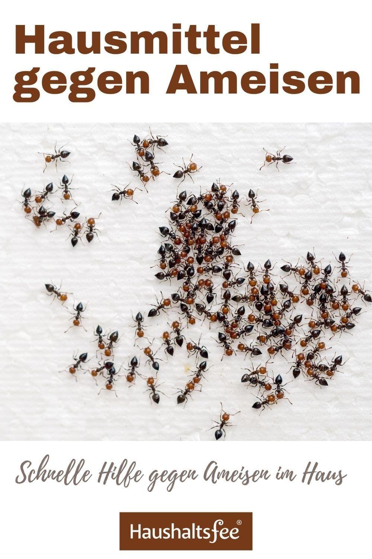 Hausmittel gegen Ameisen  Haushaltsfee.org in 18  Hausmittel