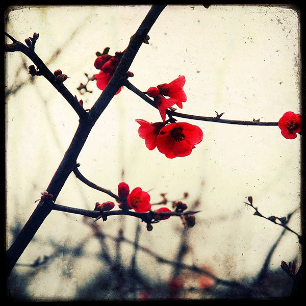 ? Red Spring