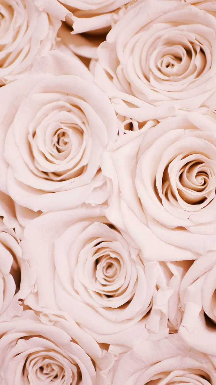 29 Romantic Roses iPhone X Wallpapers Rose gold
