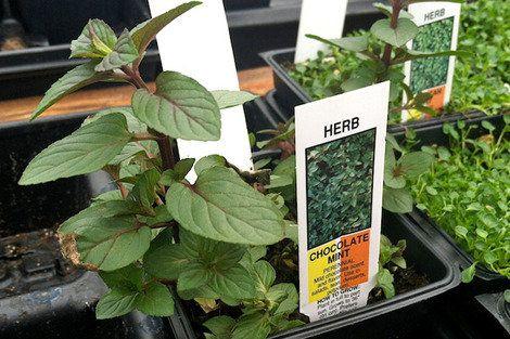 5 Unusual Herbs to Grow This Summer | Shine Food - Yahoo! Shine