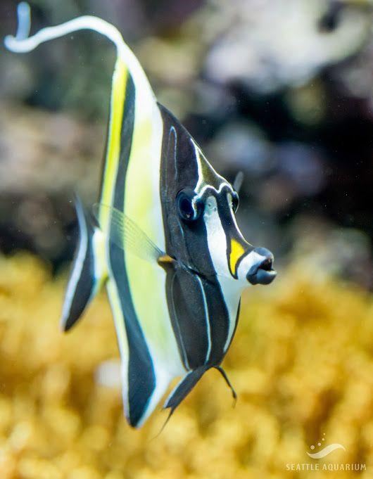 Sign In Marine Aquarium Tropical Fish Underwater Life