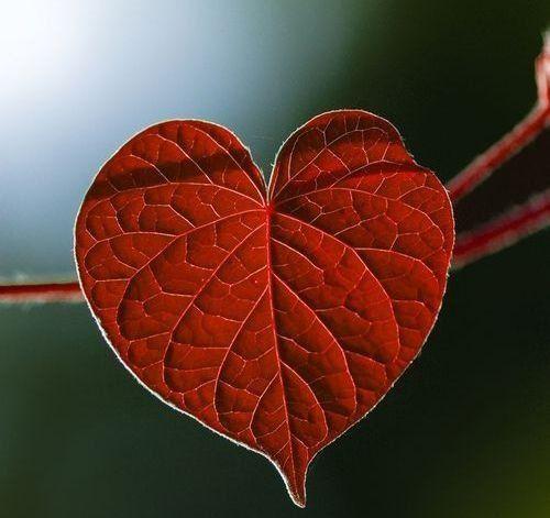 10+ Hojas en forma de corazon ideas
