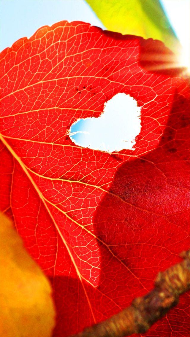 Tap And Get The Free App Art Creative Cute Autumn Leafs Heart Love Hd Iphone Wallpaper