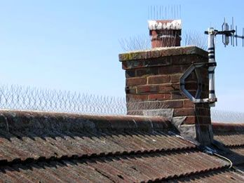 Roof Top Seagull Deterrent Spikes Installed On The Red