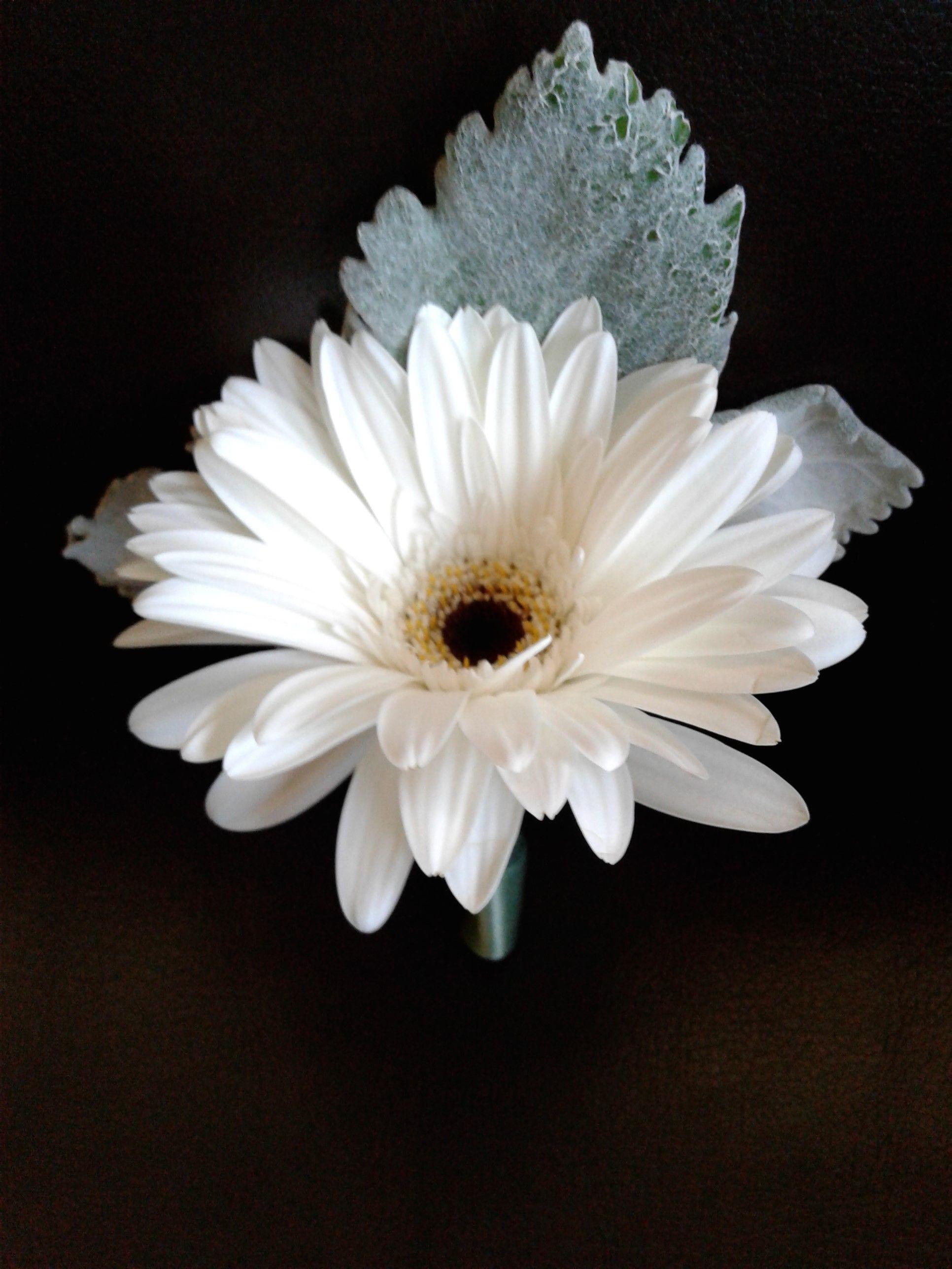 White Gerbera Daisy Boutonniere Whiteboutonniere