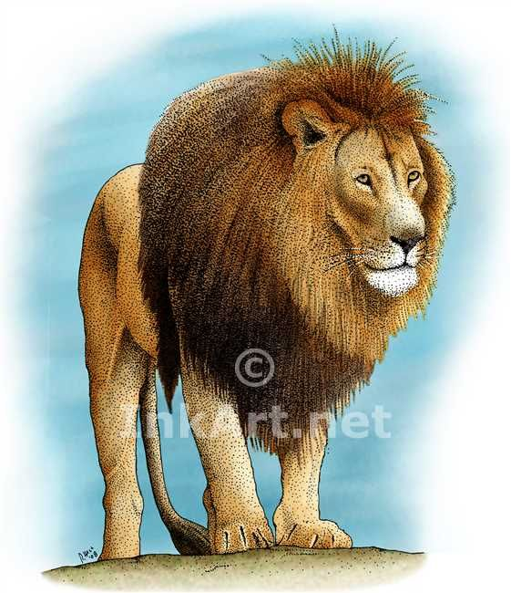 lion illustration color  Buscar con Google  Animales  Pinterest