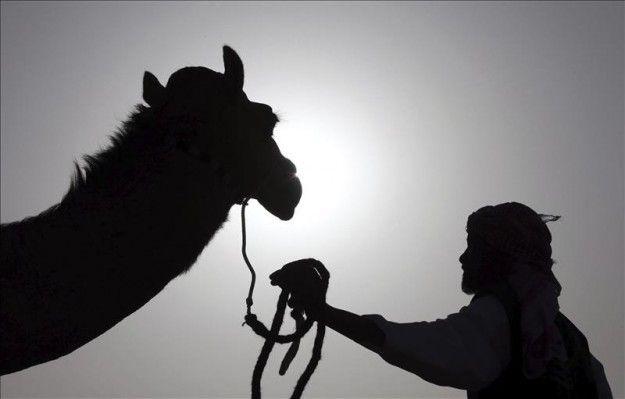 Puerto Rico prohíbe introducir especies exóticas, incluidos los camellos