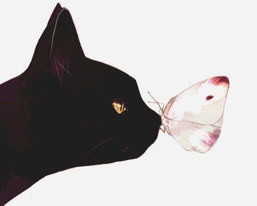 Cat with butterfly.